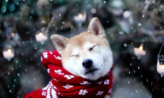 8 Best Ways To Keep Dogs Warm in Winter