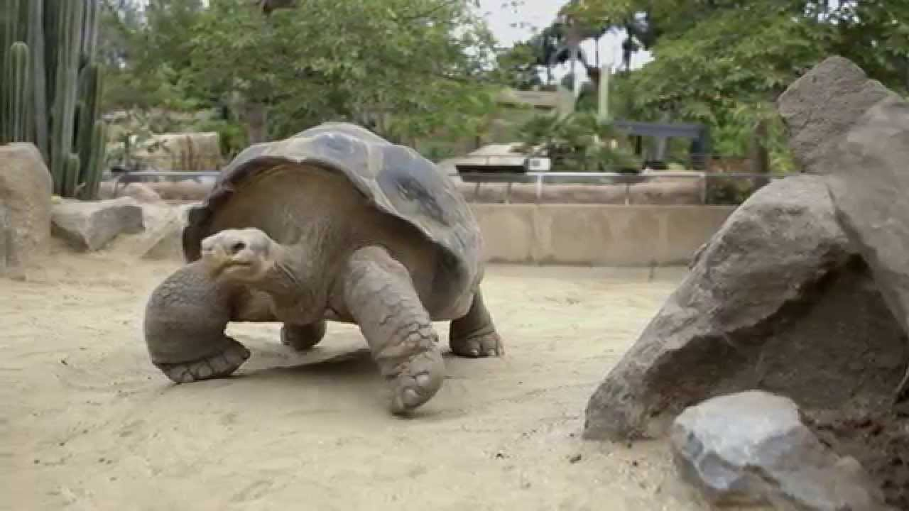Meet the Longest Living Animals on The Earth