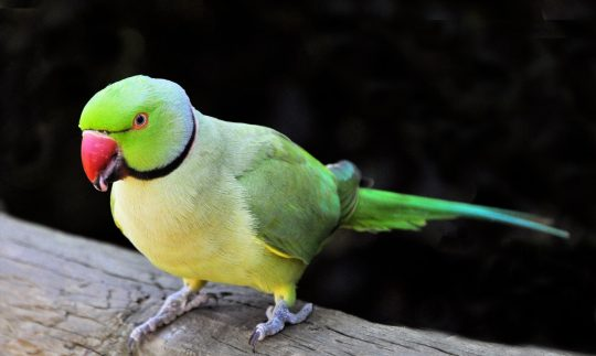 5 Talking Birds That Will Take Your Ear Off