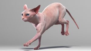 Sphynx cats can be a good option for pet