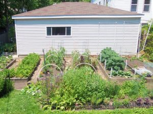 Tips for first time gardening