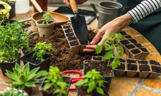 5 Tips For First-Time Gardeners