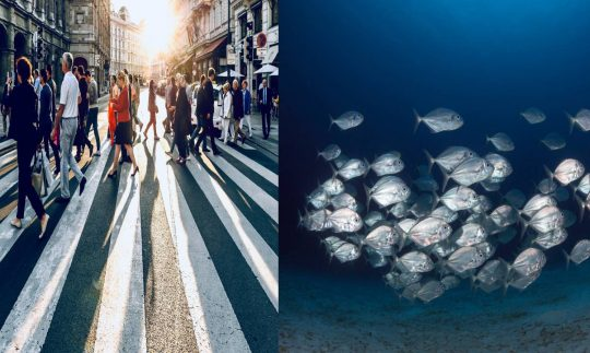 5 Ways Humans and Fish Are More Alike