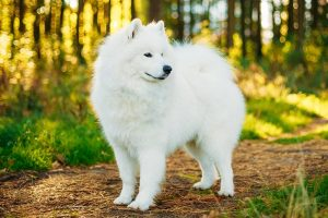 The Most Expensive Dog Breeds Of All Time