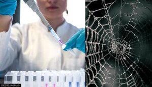 Vegan spider silk: An alternative remedy to kick off plastic?